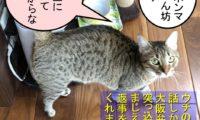 1:猫の吹き替え